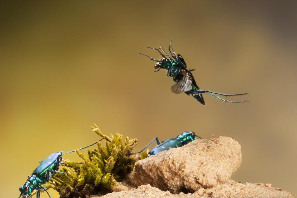 Insects in Flight