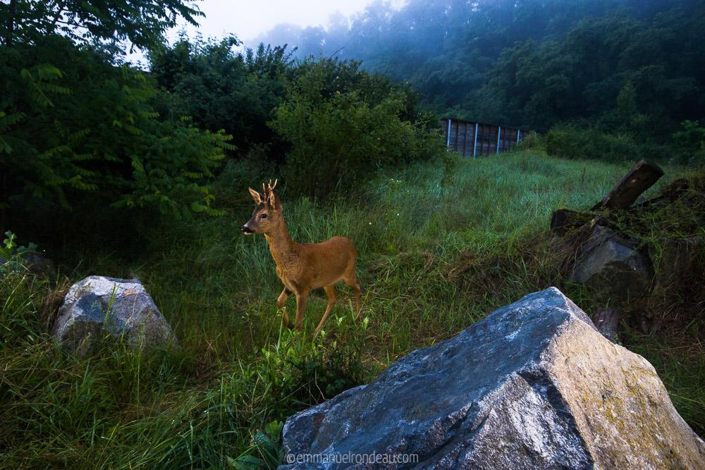 A Camera Trapping Interview with Emmanuel Rondeau