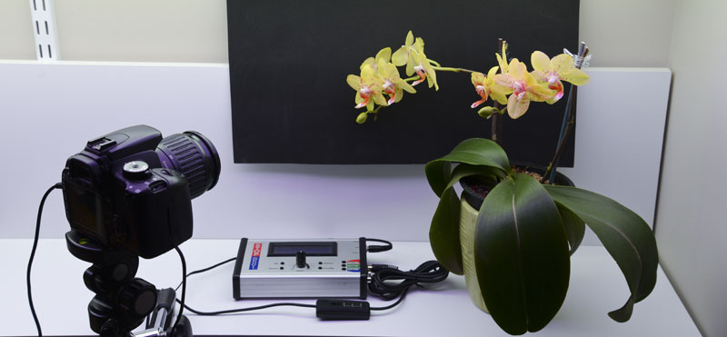 Orchid Time Lapse Stage