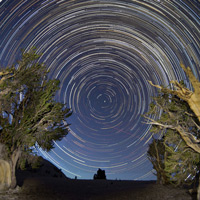 Bristlecone Star Trails Copyright Roy Dunn